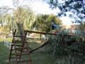 Il grande albero nel cortile dell'asilo della Cesanella